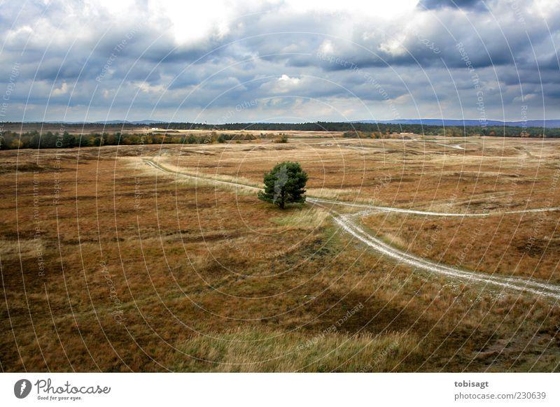 Gabelung Natur Landschaft Himmel Wolken Herbst Wetter Baum Gras Sträucher Wiese Ferne trocken blau braun grün Einsamkeit Farbfoto Außenaufnahme Menschenleer Tag