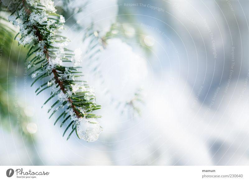 Wintersonne Baum schön kalt Schnee hell Eis glänzend authentisch Frost Zweig Tannennadel Nadelbaum Tannenzweig