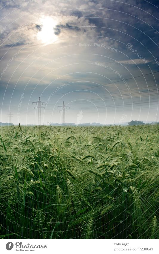 Kornfeld Himmel Natur grün Sonne Wolken ruhig Frühling Feld Schönes Wetter Hochspannungsleitung Ähren Umwelt
