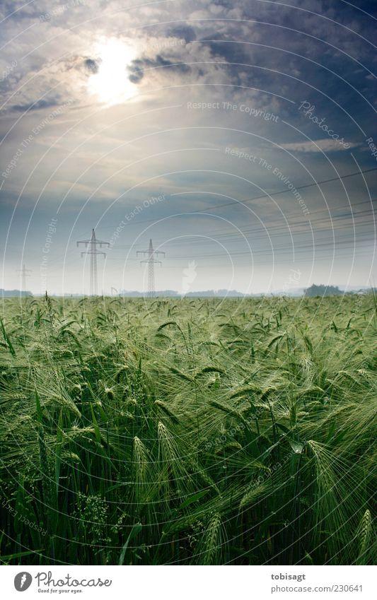 Kornfeld Natur Himmel Wolken Sonne Sonnenlicht Frühling Schönes Wetter Feld ruhig Farbfoto Außenaufnahme Menschenleer Tag Starke Tiefenschärfe