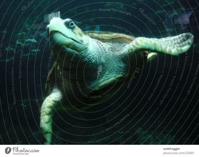 Was guckst Du? Schildkröte Meer Aquarium