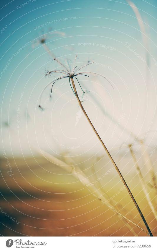 Satellite Natur Pflanze Herbst Frühling Sträucher natürlich Schönes Wetter Grünpflanze Nutzpflanze Wolkenloser Himmel Wildpflanze