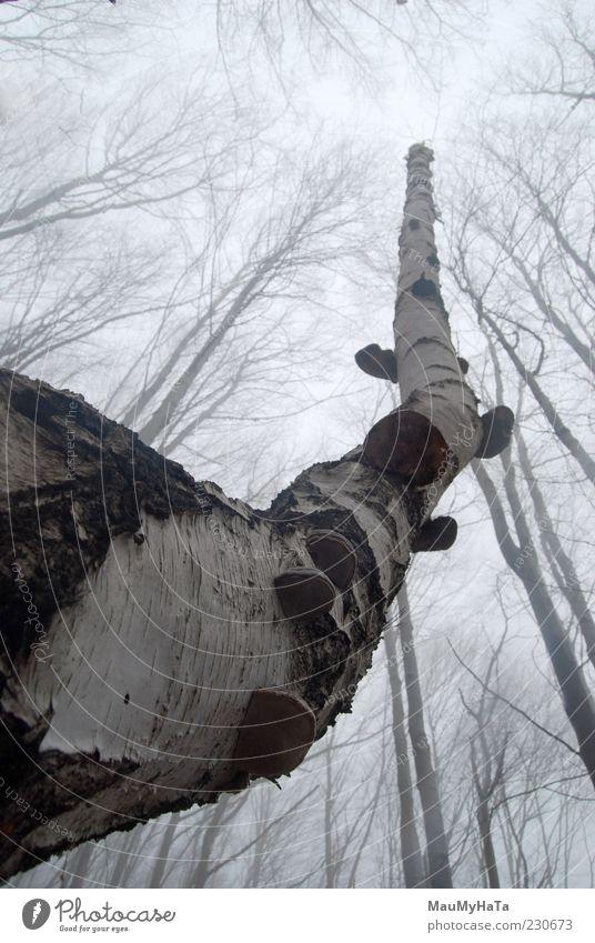 Himmel Natur Baum Pflanze Winter Wolken Wald Berge u. Gebirge Freiheit Erde Park elegant Klima planen Wandel & Veränderung