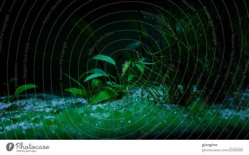 Wasser blau grün Pflanze Blatt Spielen Umwelt Denken lustig Glas sitzen nass modern natürlich Fisch Klima