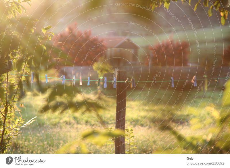Sommerabend Natur blau rot Blatt ruhig Erholung Wiese Umwelt Landschaft Garten Sträucher Bauernhof Schönes Wetter Hütte Grundbesitz