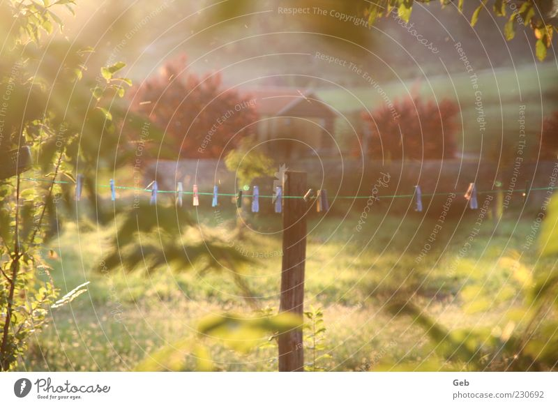 Sommerabend Umwelt Natur Landschaft Sonnenlicht Schönes Wetter Sträucher Garten Wiese Grundbesitz Hütte Schuppen Scheune Stall Bauernhof Wäscheklammern