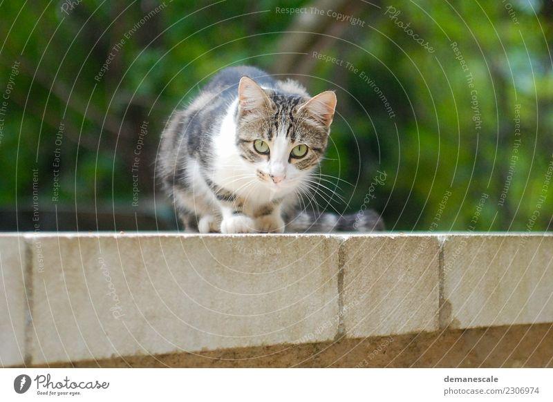 Samtpfote Natur Sommer Garten Park Tier Haustier Katze Tiergesicht Fell Pfote 1 Stein Backstein fangen Fressen hocken Jagd liegen Blick Spielen springen Neugier