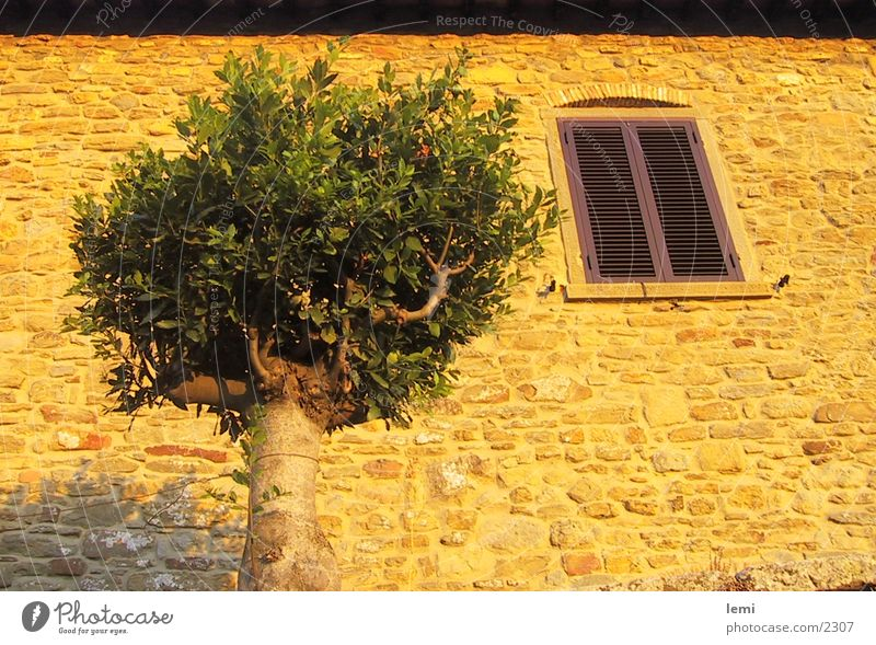 Abendsonne Baum Haus Stimmung Fassade Europa Italien Abenddämmerung Toskana