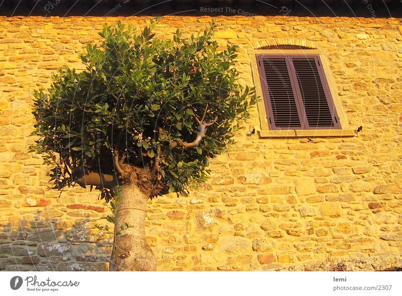 Abendsonne Baum Haus Stimmung Fassade Europa Italien Abenddämmerung Toskana Abendsonne