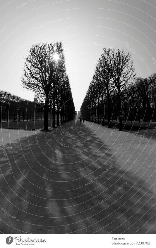 Wir trafen uns in einem Garten Himmel Baum Pflanze Ferne Straße Wege & Pfade Park Freundschaft Zeit Zusammensein gehen Platz Wandel & Veränderung Spaziergang