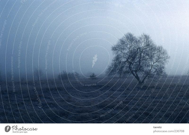 Koralle Landschaft schlechtes Wetter Nebel kalt Winter Hochmoor Hohes Venn Naturschutzgebiet Sträucher Baum verzweigt Wind vereinzelt blau-grau Einsamkeit