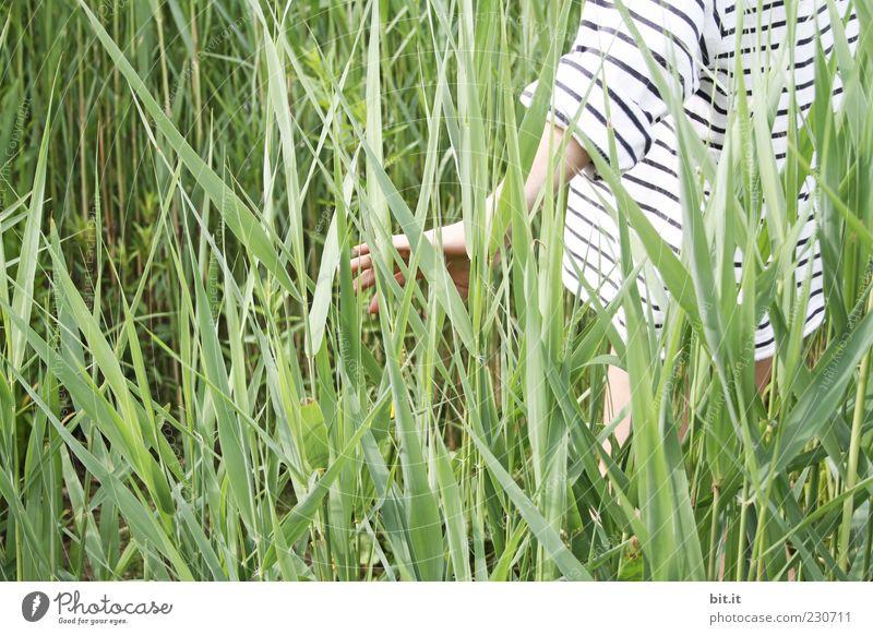 Streifzug Natur Jugendliche Hand Pflanze Sommer Rücken stehen Streifen Junge Frau berühren Schönes Wetter entdecken genießen Schilfrohr Lebensfreude Halm