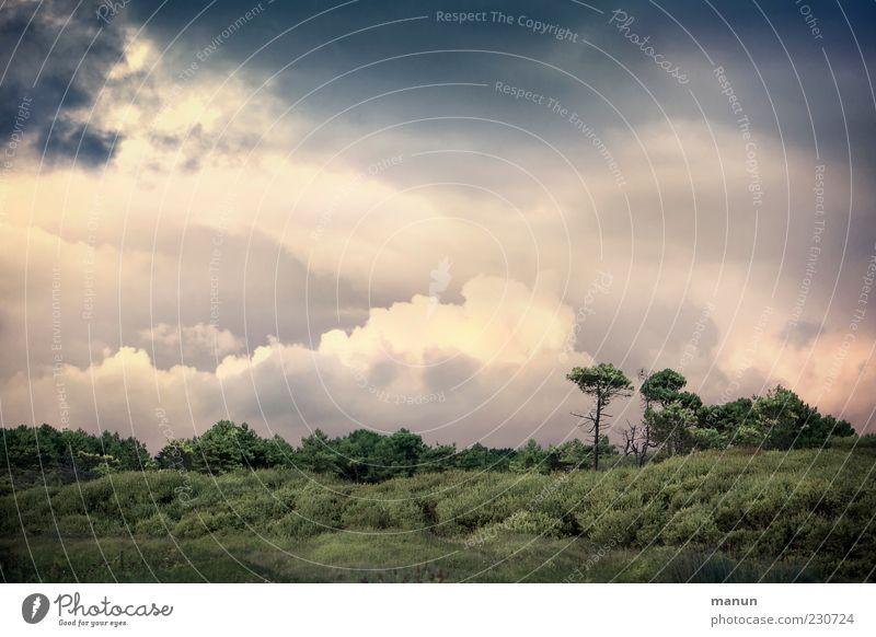 Dem Himmel so nah Natur schön Baum Pflanze Wolken Wald Landschaft Wetter natürlich Coolness Sträucher Hügel fantastisch Bretagne Klima Himmel