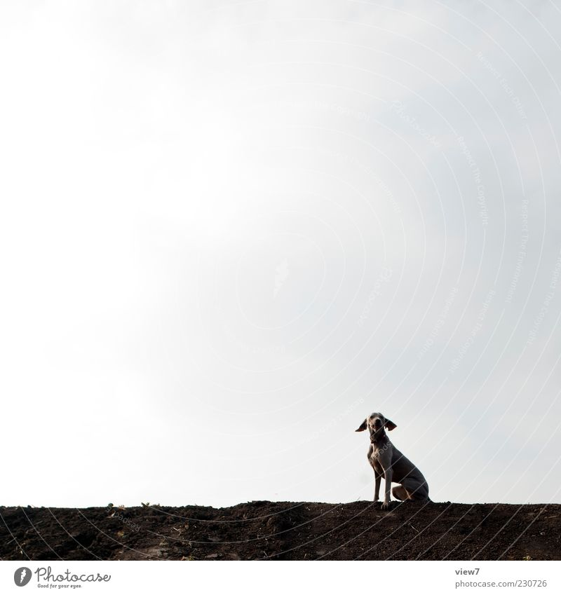 fliegende Ohren Umwelt Natur Himmel Wolken Klima Wetter Tier Hund 1 Zeichen ästhetisch authentisch einfach frisch modern oben positiv braun Beginn Einsamkeit