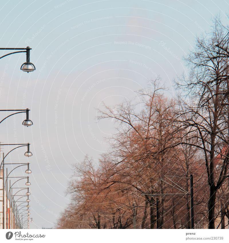 prenzelberg Himmel blau Baum Straße Lampe braun Ast Laterne Baumkrone Wolkenloser Himmel Zweige u. Äste Laternenpfahl laublos aufgereiht Prenzlauer Berg
