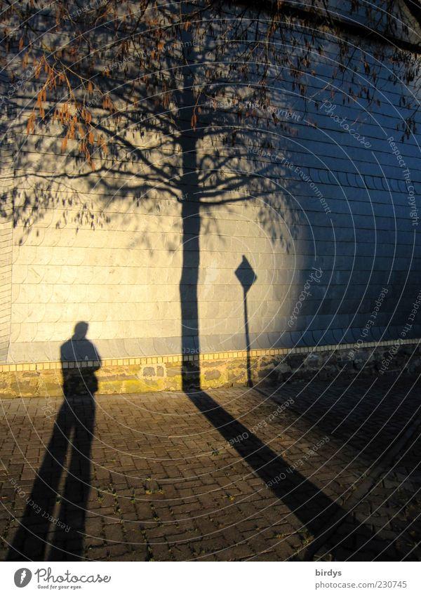 Spot an Mensch Baum Haus Mauer Stimmung gold Fassade außergewöhnlich stehen Ast Idylle Bürgersteig Abenddämmerung Surrealismus Pflastersteine