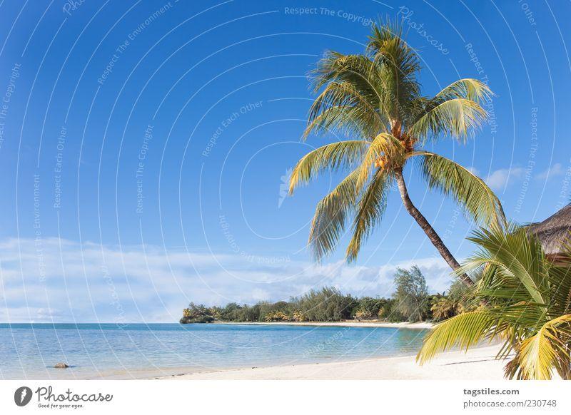 MAURITIUS Mauritius Sommer Sonne Palme Strand Meer Idylle Landschaft Farbfoto Textfreiraum links Reisefotografie Himmel deutlich schön traumhaft himmlisch Natur