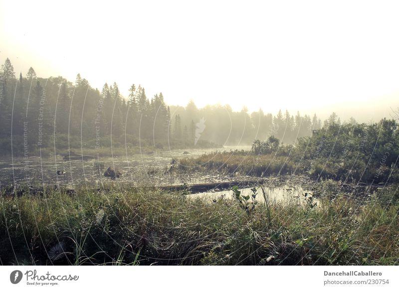Morgennebel Sommer Natur Landschaft Pflanze Wasser Wetter Nebel Baum Wald Moor Sumpf Teich schön ruhig Idylle Umwelt Tau Spinnennetz Einsamkeit