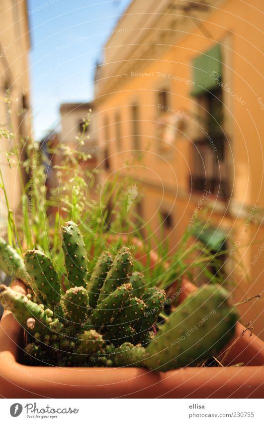 México in Barcelona - kleine Sonnengötter Pflanze Kaktus Haus Fassade Balkon mediterran grün Terrakotta gelb-orange Wärme Fensterblick Farbfoto Außenaufnahme