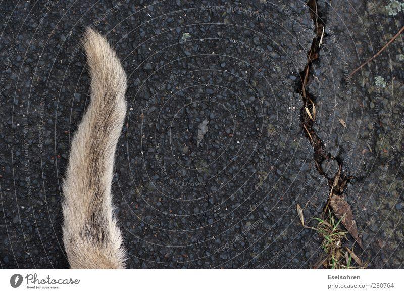 Bodenhupe Tier Haustier Hund Fell 1 liegen Schwanz Riss Farbfoto Außenaufnahme Tag Asphalt kaputt Menschenleer Detailaufnahme außergewöhnlich