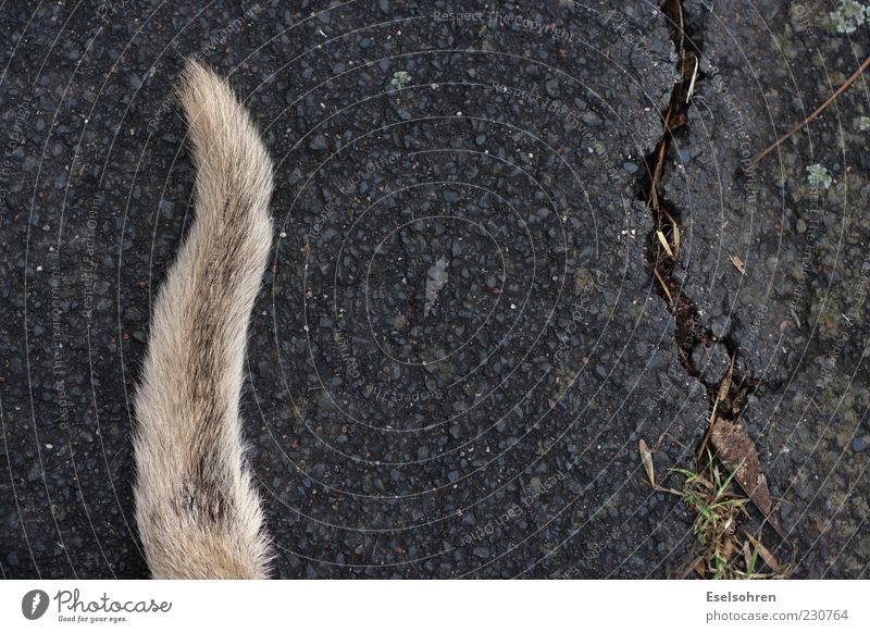 Bodenhupe Tier Hund kaputt liegen Asphalt Fell Riss Haustier Schwanz