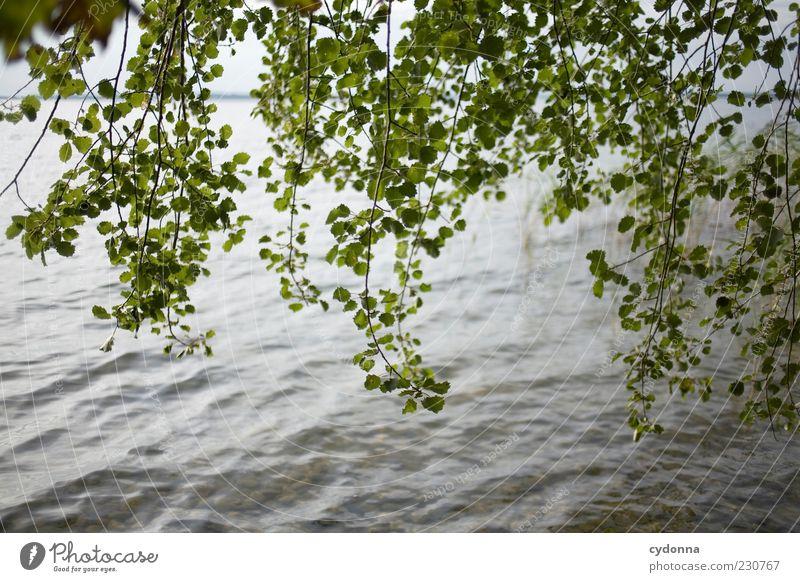 Rauschen Natur Wasser Baum Sommer ruhig Blatt Einsamkeit Leben Erholung Freiheit See Wind Umwelt Zeit ästhetisch einzigartig