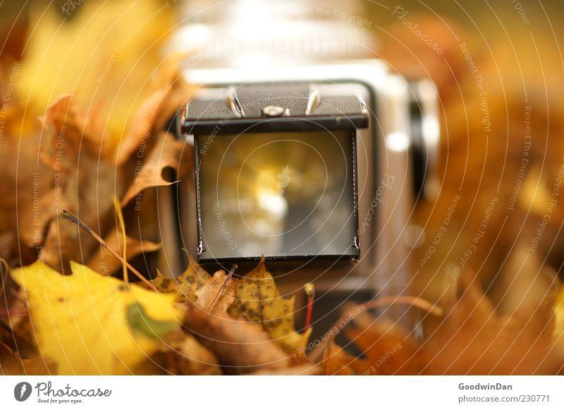 Rahmen Natur alt Blatt Herbst Umwelt Gefühle Stimmung Park Wetter authentisch außergewöhnlich einfach Fotokamera nah Schönes Wetter Herbstlaub