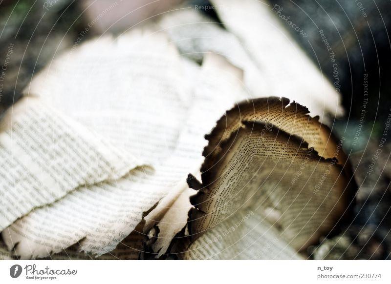 Vergängliches Wort Buch Papier alt Endzeitstimmung Nostalgie Vergänglichkeit Buchstaben verbrannt angebrannt Buchseite Roman Literatur Brandasche Farbfoto Tag