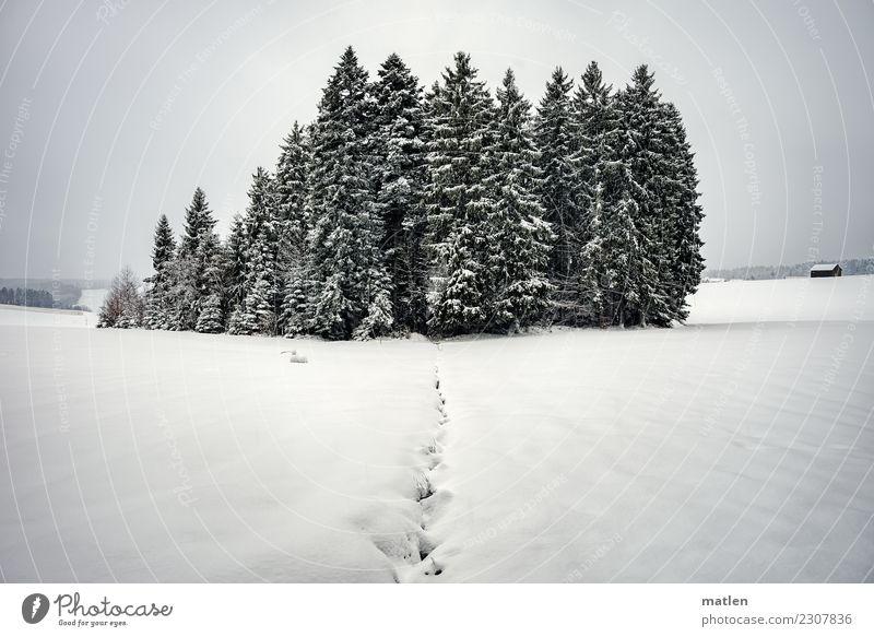 Schwarzwäldchen Natur Landschaft Himmel Wolken Horizont Winter Wetter Eis Frost Schneefall Baum Hügel Berge u. Gebirge Menschenleer Hütte weiß Schwarzwald