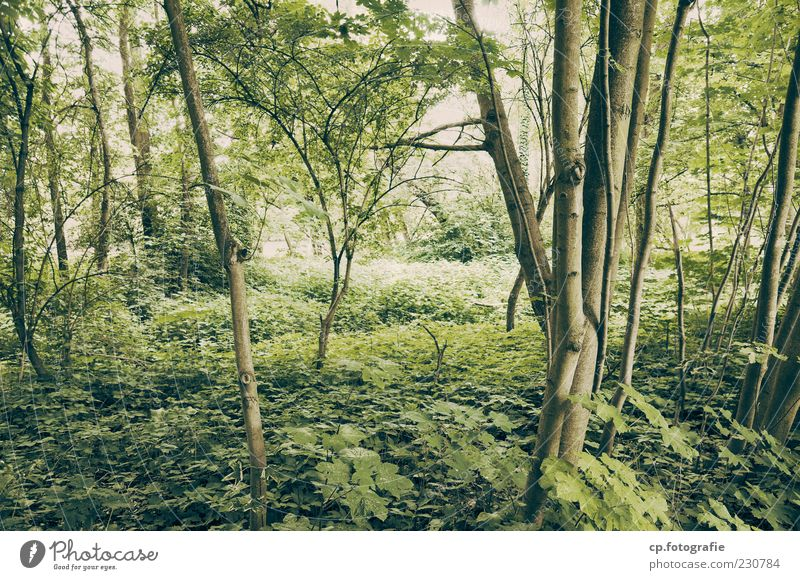 into the jungle Natur Baum Pflanze Sommer Blatt Wald natürlich Sträucher Schönes Wetter Baumstamm Ahorn Grünpflanze Zweige u. Äste Unterholz