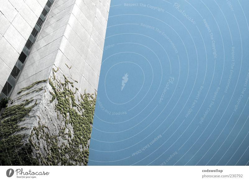 virginia is creepy Bauwerk Gebäude Fassade blau grau Wandel & Veränderung Efeu Hochhaus Wolkenloser Himmel Farbfoto Außenaufnahme Menschenleer Froschperspektive