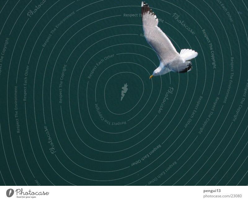 Cajka01 Freiheit Vogel fliegen Verkehr