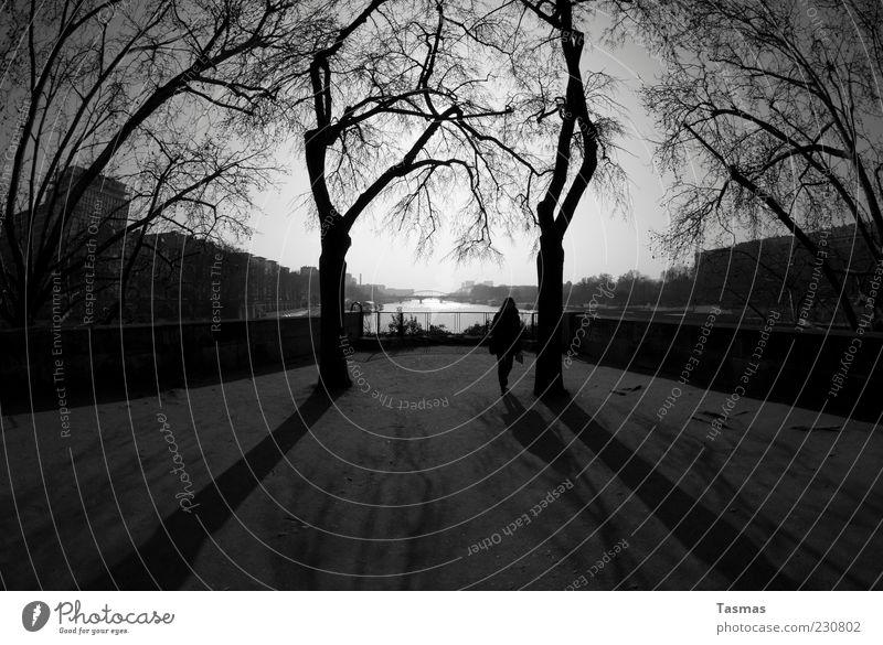 The Delicate Place Baum Pflanze Haus Wand Mauer gehen ästhetisch Spaziergang Fluss Mitte Paris genießen Sehenswürdigkeit Schwarzweißfoto Seine
