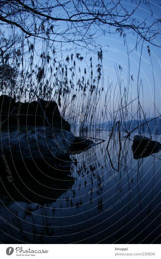 früh morgens - Nr. 100 Natur blau Wasser Pflanze Sommer schwarz ruhig Umwelt dunkel Landschaft kalt Stein See frisch Ast Schönes Wetter