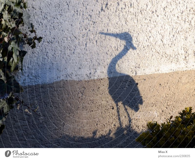 Schneller als sein Schatten Tier Wand Garten Vogel lustig stehen Dekoration & Verzierung Figur Schnabel Storch Schattenspiel Reiher