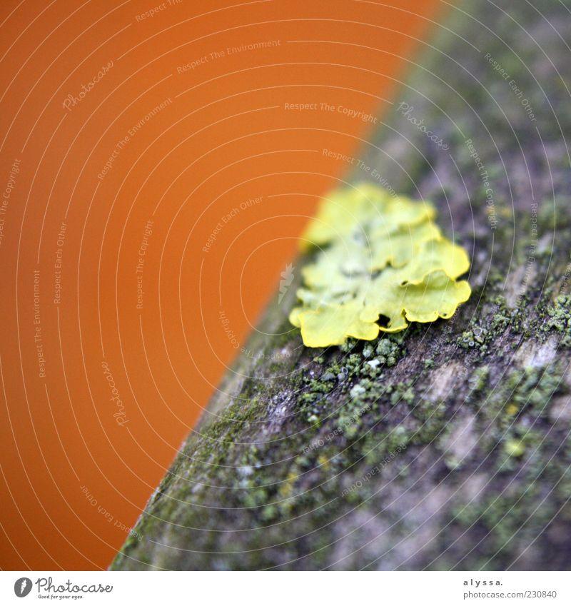 grüner Fleck. Natur Baum schwarz gelb braun Wachstum Moos Umwelt