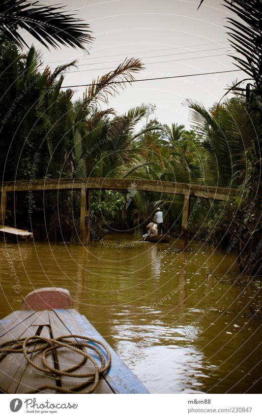 Welcome to the jungle Natur Wasser Sommer schlechtes Wetter Sträucher exotisch Urwald Flussufer Bootsfahrt Ruderboot Seil beobachten entdecken fahren nass