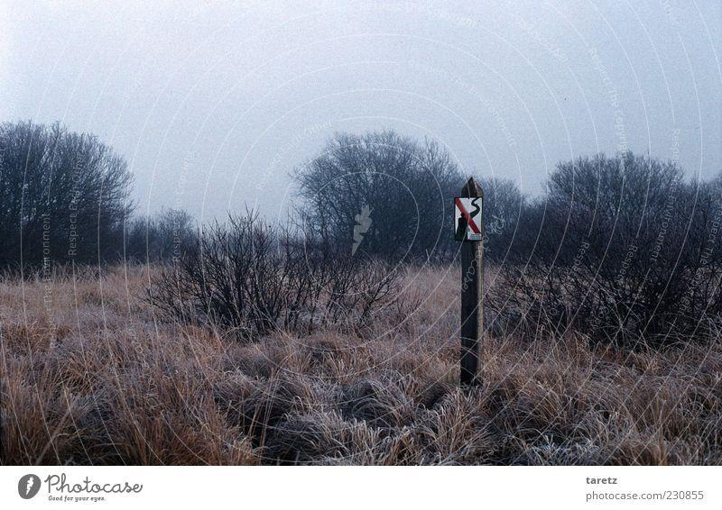 Verlaufen Umwelt Natur Landschaft Pflanze Herbst Winter schlechtes Wetter Nebel Gras Sträucher Moor Sumpf Hochmoor Hohes Venn Zeichen Schilder & Markierungen