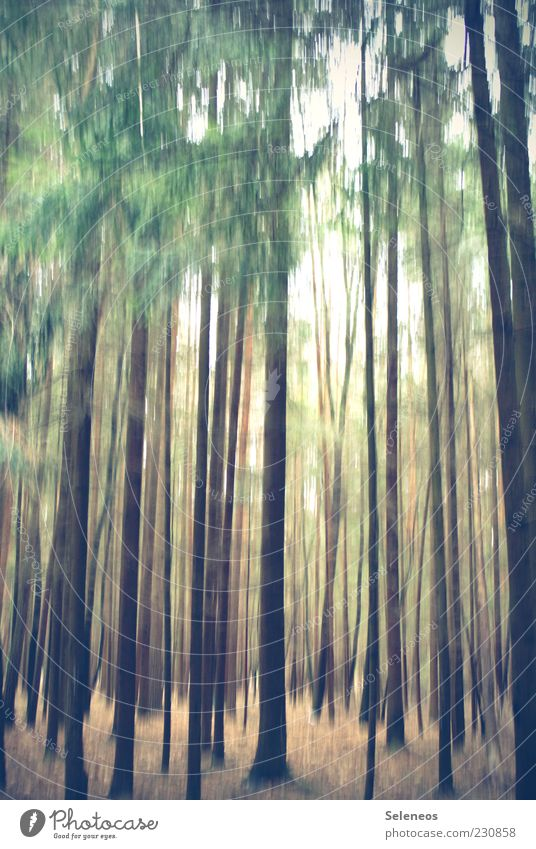 Märchenwald Natur Baum Pflanze Sommer Wald Umwelt Wetter mehrere viele Schönes Wetter Baumstamm Unschärfe Düsterwald