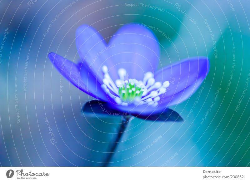 Natur blau grün schön Pflanze dunkel Wiese Frühling Blüte Garten hell Park Feld wild frisch authentisch