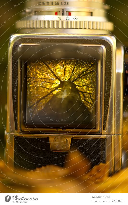 Der Vorgang. Umwelt Natur Herbst Pflanze Baum Park Fotokamera Mittelformat alt außergewöhnlich authentisch eckig nah schön viele Stimmung Farbfoto Außenaufnahme