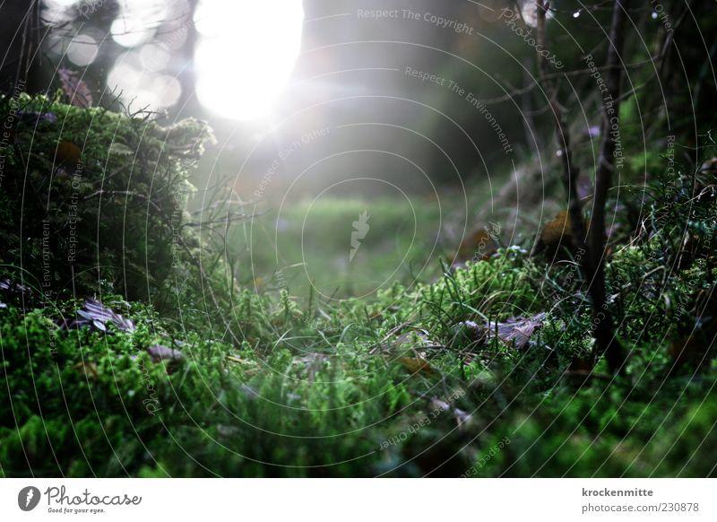 Einhorn knapp verpasst Natur grün Pflanze Wald Umwelt Landschaft Gras Erde Sträucher Ast fantastisch Moos mystisch Märchen Geborgenheit Grünpflanze