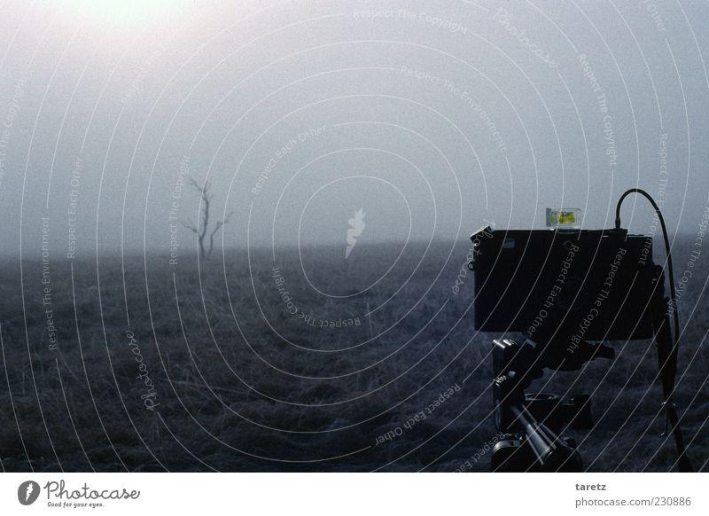 Hinter der Kamera Baum Winter ruhig Einsamkeit Herbst Wiese kalt Landschaft Horizont Nebel Fotografie ästhetisch einfach Fotokamera analog Zweig