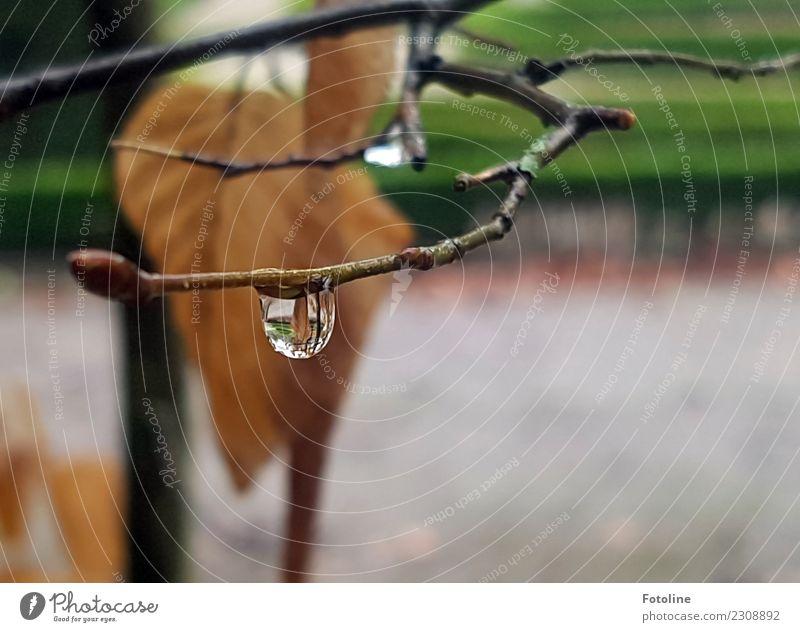 Grau in Grau im Winter Umwelt Natur Pflanze Urelemente Wasser Wassertropfen Wetter schlechtes Wetter Regen Sträucher Blatt Garten Park kalt nah nass natürlich