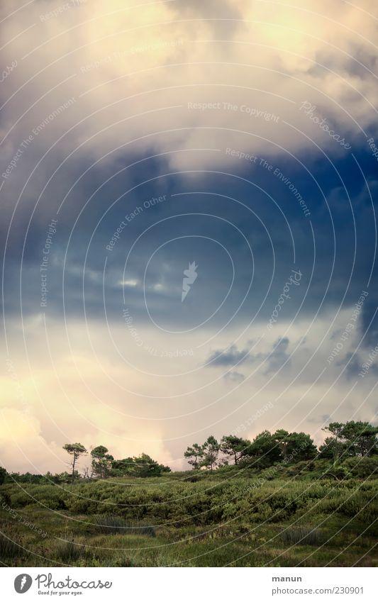 Dem Himmel so nah II Natur Landschaft Urelemente Wolken Wetter Baum Sträucher Wald Bretagne authentisch natürlich schön Ferien & Urlaub & Reisen Farbfoto