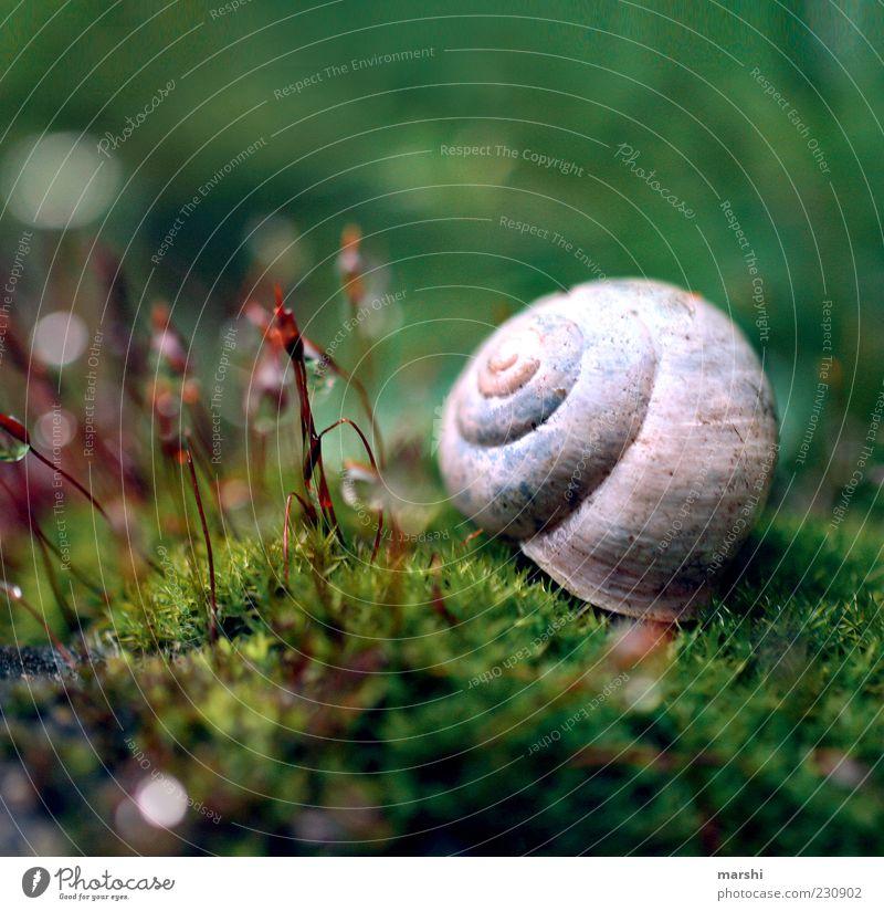 kleine verwunschene Welt Natur grün Pflanze klein Moos Schnecke Makroaufnahme Tier Schneckenhaus