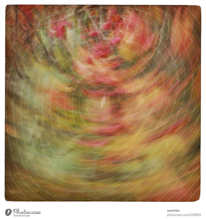 verdrehte welt ... Umwelt Natur Pflanze Herbst Sträucher Kunst mehrfarbig abstrakt Muster Strukturen & Formen Menschenleer Bewegungsunschärfe drehen Unschärfe