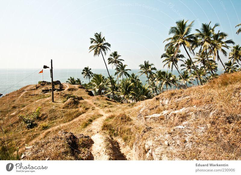 ...palmen, oben... Natur Landschaft Pflanze Himmel Wolkenloser Himmel Schönes Wetter Baum Gras Indien Asien Palme blau Goa Berge u. Gebirge Gipfel Farbfoto