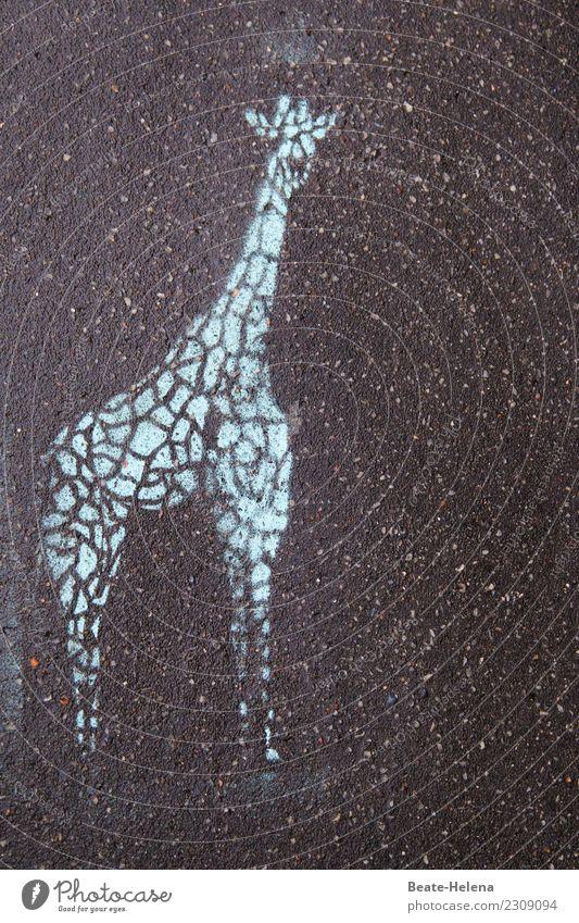 steinig   das lange Leben der Giraffe blau Stadt Tier schwarz Straße Graffiti Umwelt außergewöhnlich Stein Wohnung elegant Wildtier Kraft ästhetisch stehen