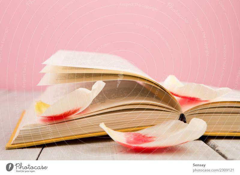 Bildungs- und Lesekonzept lesen Tisch Wissenschaften Schule lernen Studium Business Menschengruppe Buch Bibliothek Blume Blatt Blüte Papier Holz alt rosa rot